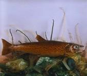 cropped-aberystwyth-fish2.jpg